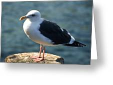 Contemplating Life Of A Sea Gull Greeting Card