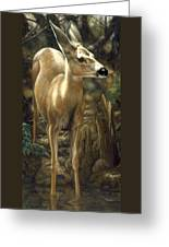 Mule Deer - Contemplation Greeting Card by Crista Forest