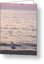 Contemplative Seagull Greeting Card