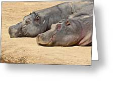 Contented Hippos Greeting Card by Ed Pettitt