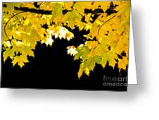 Contrast Of Autumn, Quincy California Greeting Card