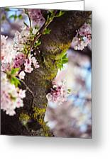 Contrast. Pink Spring In Amsterdam Greeting Card