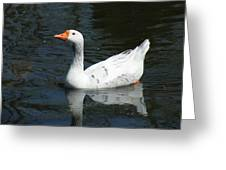 Contrasting Goose Greeting Card