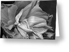 Contrasting Hibiscus Greeting Card