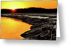 Contrasts In Nature Greeting Card