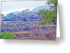 Controlled Burn Area In Kruger National Park-south Africa Greeting Card