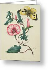 Convolvulus With Yellow Butterfly Greeting Card