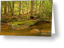 Cook Forest Rocks And Roots Greeting Card