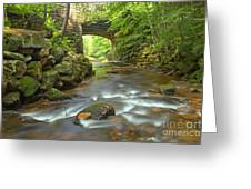 Cook Forest Stream Under The Bridge Greeting Card