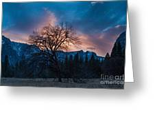 Cooks Meadow Oak At Sunset Greeting Card