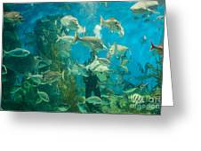 Cool Aquarium Greeting Card by Ray Warren