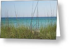 Cool Breeze Greeting Card