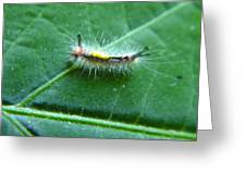 Cool Caterpillar Greeting Card