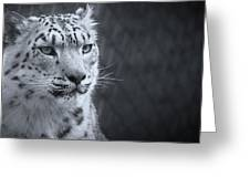 Cool Leopard Greeting Card