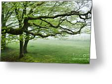 Cool Misty Day At Blackbury Camp Greeting Card
