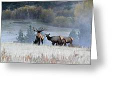 Cool Misty Morning Greeting Card
