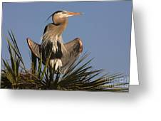 Great Blue Heron Air Conditioning Greeting Card