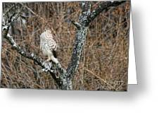 Coopers Hawk 0741 Greeting Card