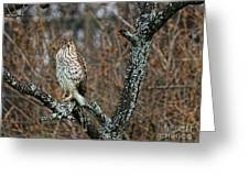 Coopers Hawk 0745 Greeting Card