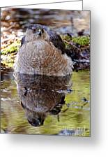 Coopers Hawk Pictures 112 Greeting Card