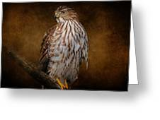 Coopers Hawk Portrait 1 Greeting Card
