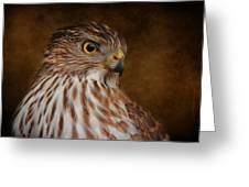 Coopers Hawk Portrait 2 Greeting Card