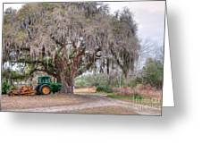 Coosaw Cross Roads With Live Oak Greeting Card