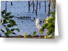 Coots On A Tree Greeting Card