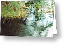 Coots Greeting Card