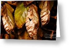 Copper Beech Leaves Greeting Card