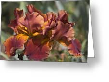 Copper Gems Greeting Card