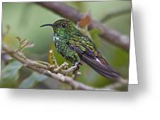 Copper-headed Emerald Beauty Greeting Card