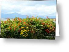 Coppertips On The Dingle Peninsula Greeting Card