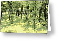 Copse Of Trees Sunlight Greeting Card