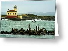 Coquille River Lighthouse And Birds Greeting Card