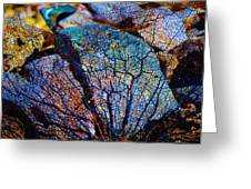 Coral Beached Greeting Card