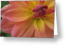 Coral Beauty Dahlia Greeting Card