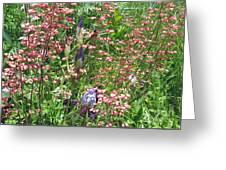 Coral Bells And Irises Greeting Card