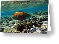 Coral Cruiser Greeting Card