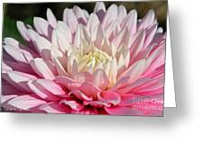 Coral Dahlia Greeting Card