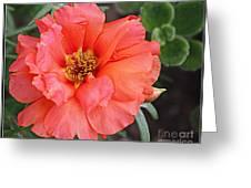 Coral Desert Rose Greeting Card