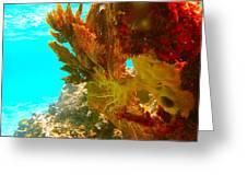Coral Fern Greeting Card