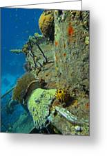 Coral Growth On A Ship Wreck Greeting Card