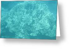 Coral In Maui Greeting Card
