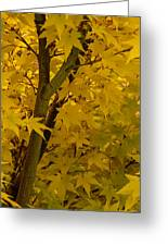 Coral Maple Fall Color Greeting Card
