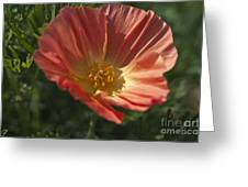 Coral Poppy 1 Greeting Card