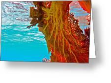 Coral Reef Fern Greeting Card