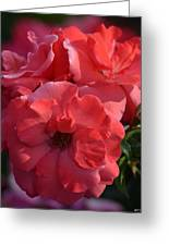 Coral Roses 2013 Greeting Card