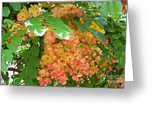 Coral Shower Tree Greeting Card
