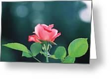 Coral Sunshine Greeting Card